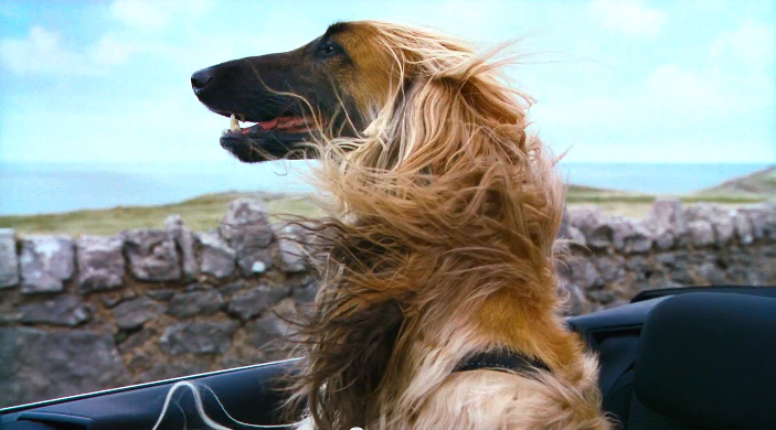 VIDEO: VW's 'Woofwagen' ad campaign stars 36 dogs Image #207305