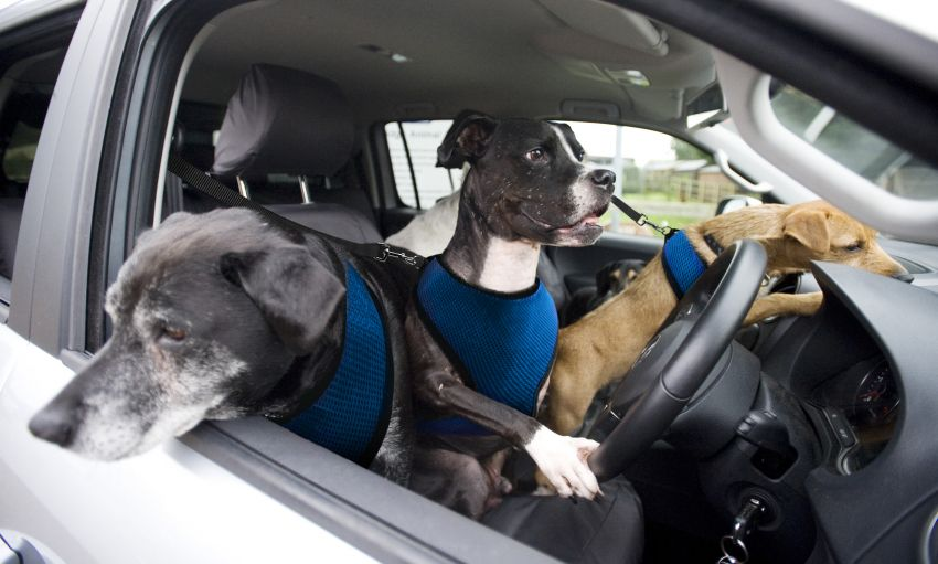 Paw-werful driving in a 180 PS Volkswagen Amarok Image #238799