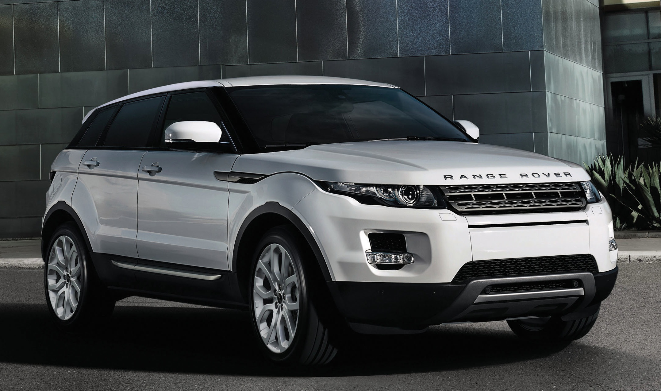 Dog In Land Rover Commercial 2014 | Dog Breeds Picture
