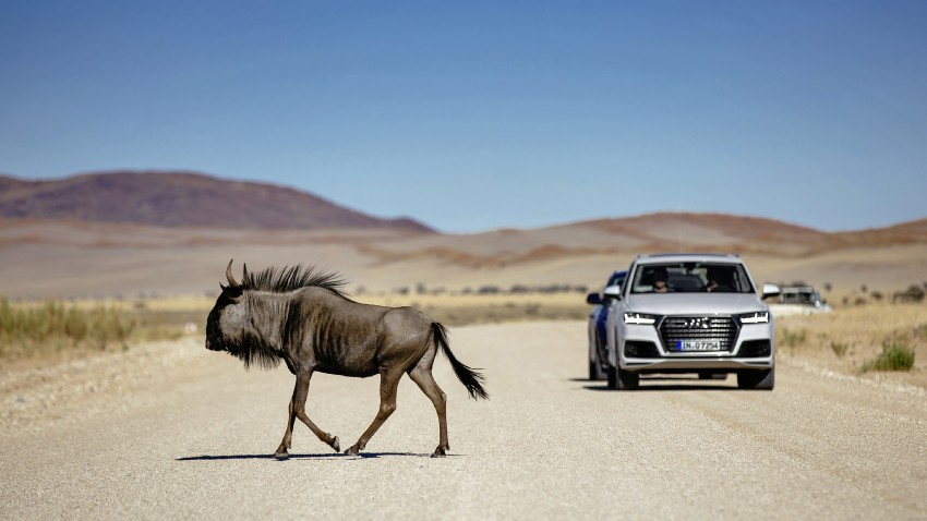 Audi Q7 – second generation 7-seater SUV debuts Image #329374