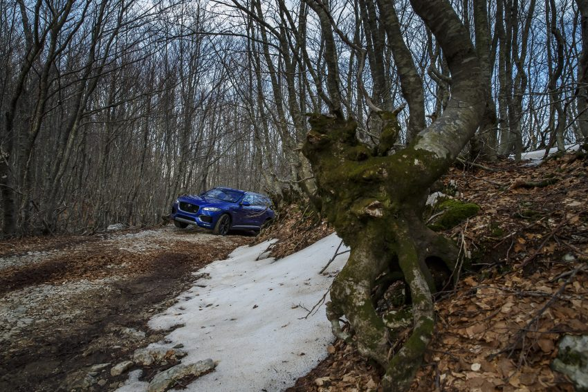DRIVEN: Jaguar F-Pace – a go-anywhere Leaping Cat Image #496961