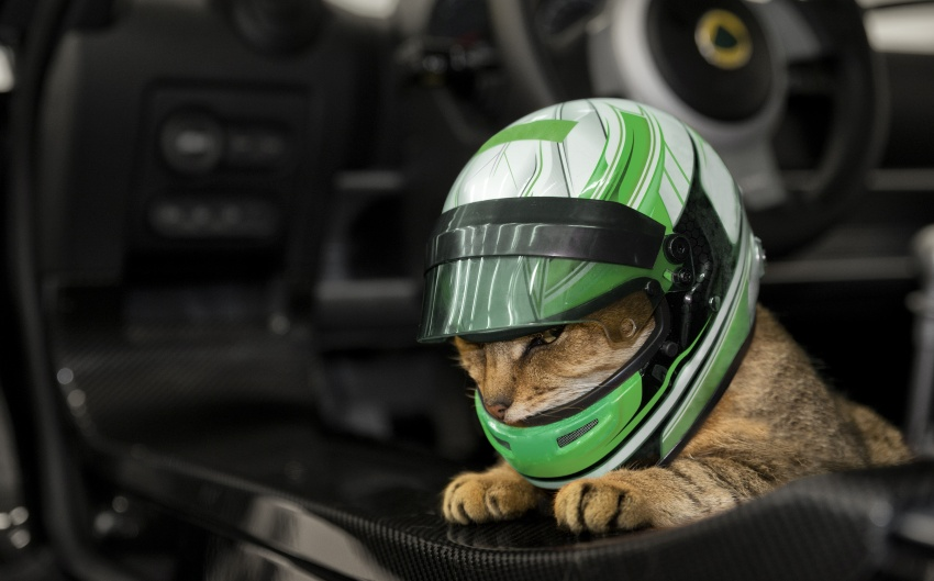 Lotus Ped Lids – no pussy-footing around with safety Image #638357