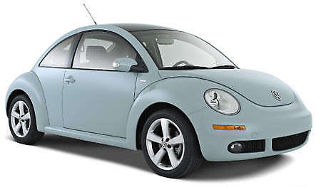 clear-stock-beetle