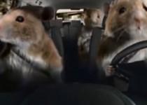 kia-soul-hamster